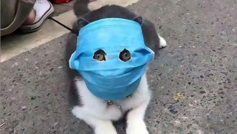 <p> કોરોના રોગચાળો ફાટી નીકળ્યા પછી ઘરેલું માસ્ક પહેરેલું કૂતરો. તેનો ધણી ફરવા ગયો છે. એવું કહેવામાં આવી રહ્યું છે કે કોરોના ચેપ પ્રાણીઓમાં પણ ફેલાય છે. & Nbsp; & nbsp; </ p>