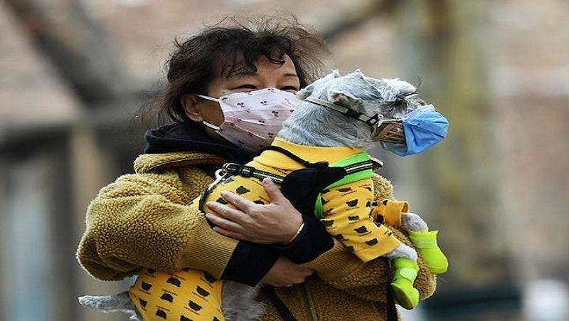 <p> કોરોના વાયરસ રોગચાળા પછી, ચીનમાં એક છોકરીએ તેના કૂતરાને માસ્ક પહેરીને માથું અને પગરખાં coveredાંકી દીધાં છે. & nbsp; </ p>