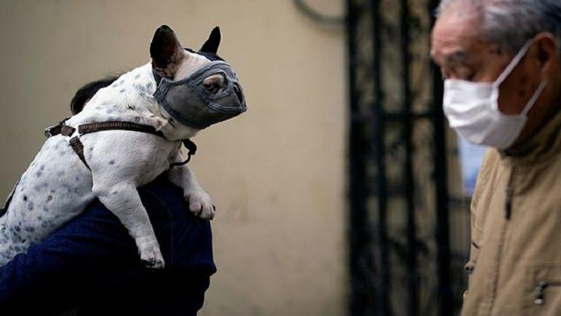 <p> શાંઘાઈમાં એક વ્યક્તિએ તેના કૂતરાને માસ્ક પહેર્યા પછી, તેને ખભા પર ઉપાડ્યો. & nbsp; </ p>